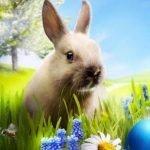 Húsvéti Ünnepek Borvidéki Módra