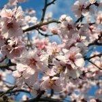 Tavaszi borhétvégék szuper áron